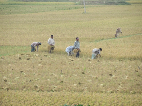 Bezig met de oogst